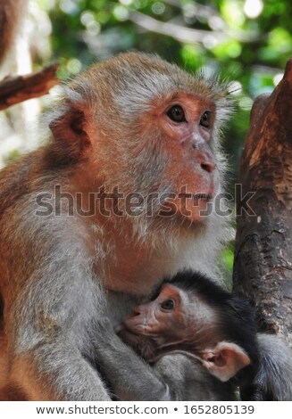 Mother and Baby Monkey Stock photo © rhamm