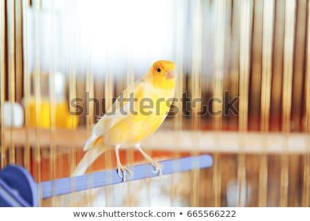 gaiola · gaiola · pássaro · crianças · amor · cabelo - foto stock © gemenacom