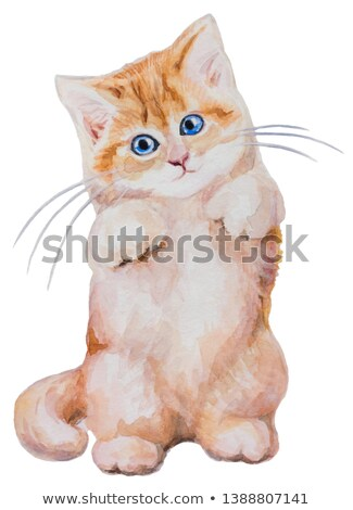 Brown tabby kitten standing on two feet  Stock photo © dnsphotography