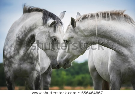 Beautiful Pair of Horses on the Farm ranch Stock photo © stevanovicigor