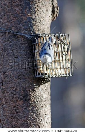природы птица животного улице живая природа Сток-фото © brm1949