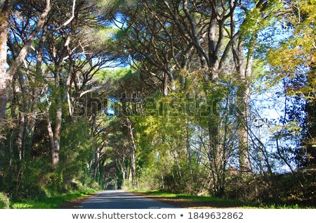 Rural road lined with leafy green trees Stock photo © juniart