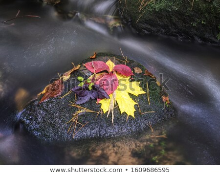 Fall Autumn Leaves Forest Stream Bubbling Brook Mossy River Stock photo © cboswell