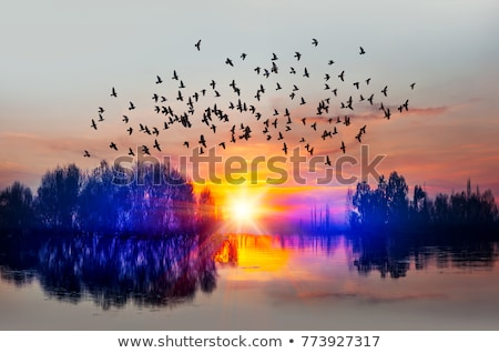 flying birds against the evening sky Stock photo © OleksandrO