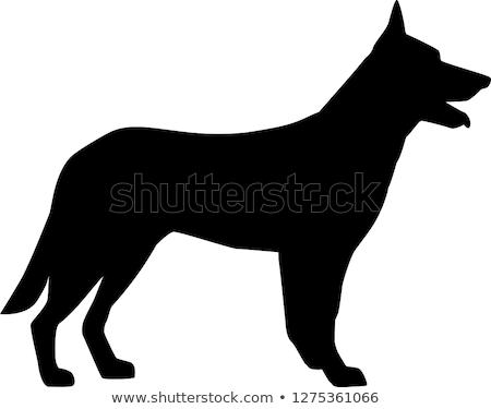 German Shepherd Silhouette Stock photo © phil_albertelli