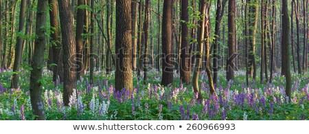 ストックフォト: 森林 · 春 · 風景 · 最初 · 春の花 · 背景