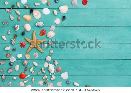 sea star and assorted sea shells on stained wood stock photo © ozgur