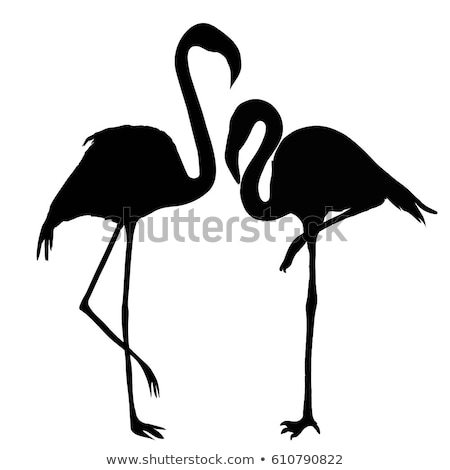 vector illustrations of silhouette flamingo stock photo © adrian_n