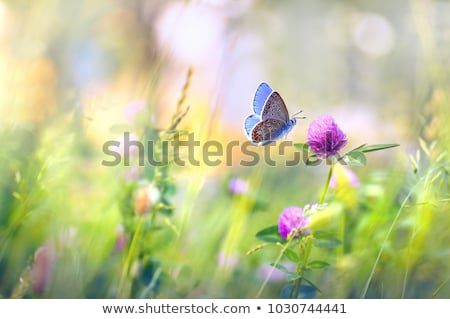A butterfly in the garden with blooming flowers Stock photo © bluering