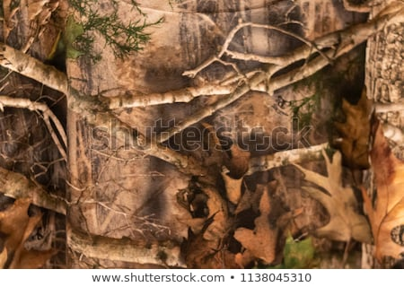 Hunter In Camo Stock photo © Trigem4
