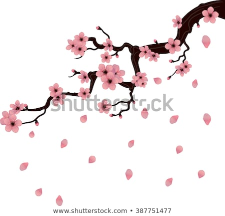 Florescimento ramo sakura eps 10 japonês Foto stock © beholdereye