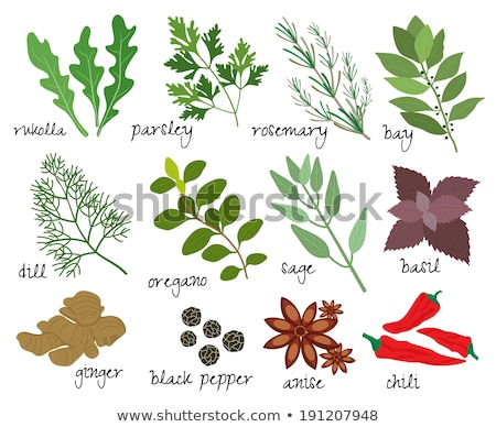 Sprig of bay leaves and peppercorns Stock photo © Digifoodstock