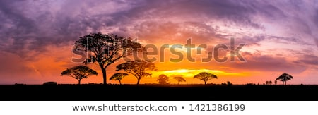 naplemente · afrikai · szavanna · sziluettek · kettő · zsiráfok - stock fotó © liolle