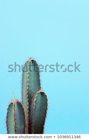 волосатый кактус пустыне подробность облака волос Сток-фото © daboost