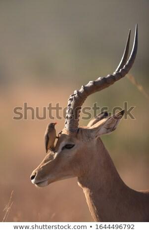 молодые ЮАР ребенка парка Safari поездку Сток-фото © compuinfoto