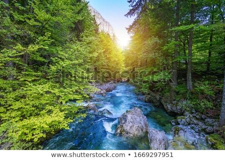 Vízesés völgy Szlovénia közelkép természet tájkép Stock fotó © boggy