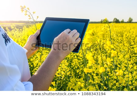 Farmer inspecting rapeseed crop in field using tablet Stock photo © simazoran