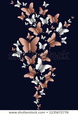 Cobre mariposa grupo vacío primavera mariposas Foto stock © cienpies