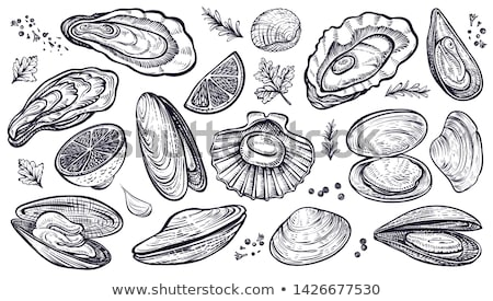 Vector Seafood Oyster and Clam Hand Drawn Graphic Stock photo © robuart