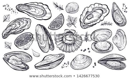 вектора морепродуктов устрица рисованной графических Сток-фото © robuart