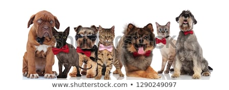 group of many stylish cats and dogs wearing bowties Stock photo © feedough