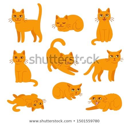 ベクトル セット 猫 笑顔 楽しい 面白い ストックフォト © olllikeballoon