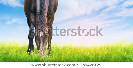 white horse is grazing in spring meadow Stock photo © artush