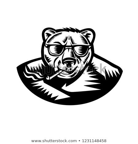 Medve dohányzás szivar retro stílus illusztráció Stock fotó © patrimonio