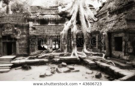 Tree taken possession of Ta Prohm temple walls Stock photo © lichtmeister