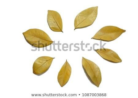 Gouden kleur blad gedetailleerd ader najaar Stockfoto © Ansonstock