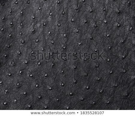 ダチョウ · 革 · 表面 · フルフレーム · 抽象的な · ブラウン - ストックフォト © stoonn