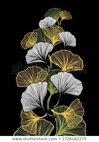bladeren · groene · bladeren · natuurlijke · frame · blad · achtergrond - stockfoto © sahua
