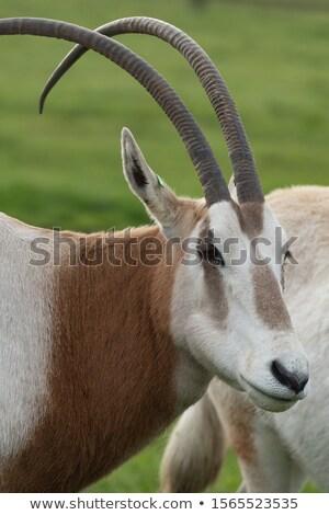 Zomer zon soorten uitgestorven wild Stockfoto © igabriela
