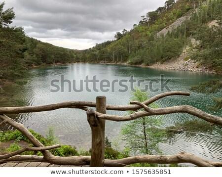 лес парка мнение Шотландии небе трава Сток-фото © broker