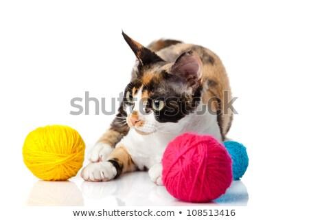 cat devon rex on white background kitten with balls of threads stock photo © ewastudio
