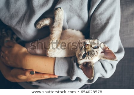 Cute little girl hugging tabby cat with love, looking at cat. stock photo © HASLOO