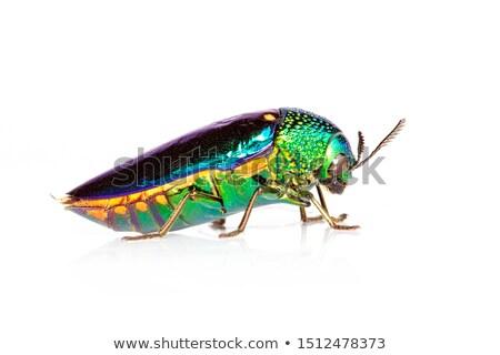 Madeni böcek beyaz doğa arka plan bilim Stok fotoğraf © prajit48