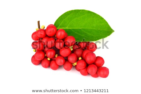 schisandra chinensis berries stock photo © marilyna