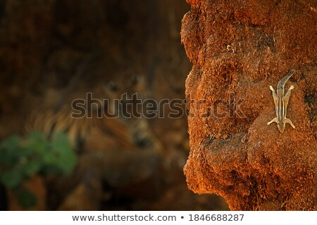 északi pálma mókus etetés öt csíkos Stock fotó © faabi