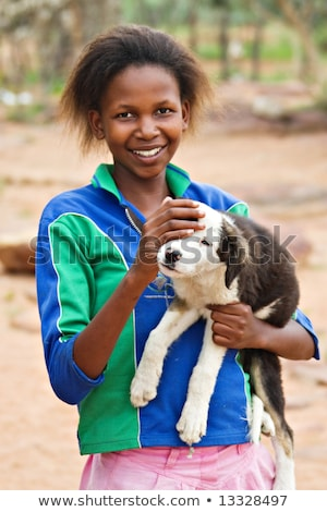 Terceiro mundo cão velho caribbean sol verde Foto stock © weston_boucher
