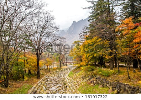 River bed landscape in South Korea Stock photo © Arrxxx