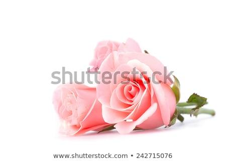 üç pembe güller sığ alan ahşap Stok fotoğraf © Tagore75