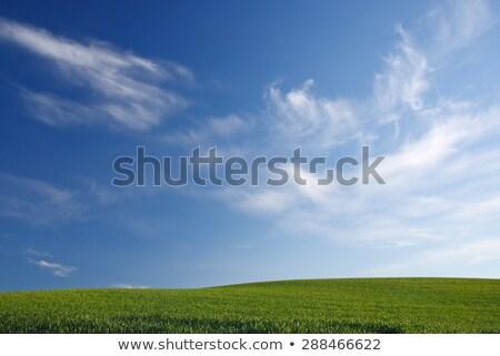 Verde trigo grama azul Washington campos Foto stock © billperry
