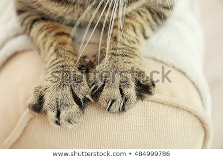 Amado gatos dos sesión cerca noche Foto stock © oxygen64