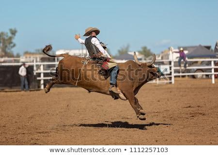 Byka ilustracja gospodarstwa sylwetka cowboy hat Zdjęcia stock © adrenalina