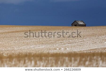 préri · tájkép · tél · Saskatchewan · Kanada · festői - stock fotó © pictureguy