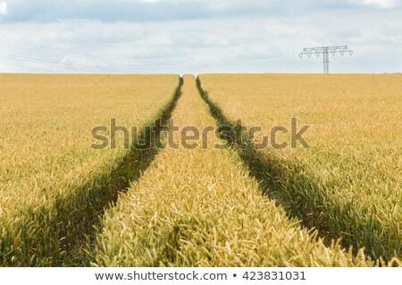 traktor · búzamező · mezőgazdasági · tájkép · égbolt · étel - stock fotó © creisinger