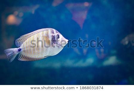 submarino · isla · tropical · superficial · agua · subacuático · vida - foto stock © calek
