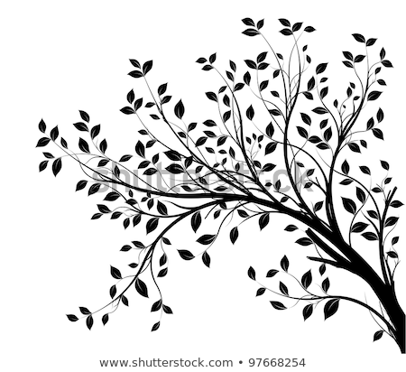 tree branches silhouette in black over white Stock photo © Melvin07