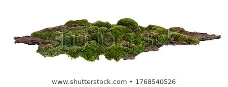 yosun · havlama · ağaç · orman · soyut · dizayn - stok fotoğraf © klinker